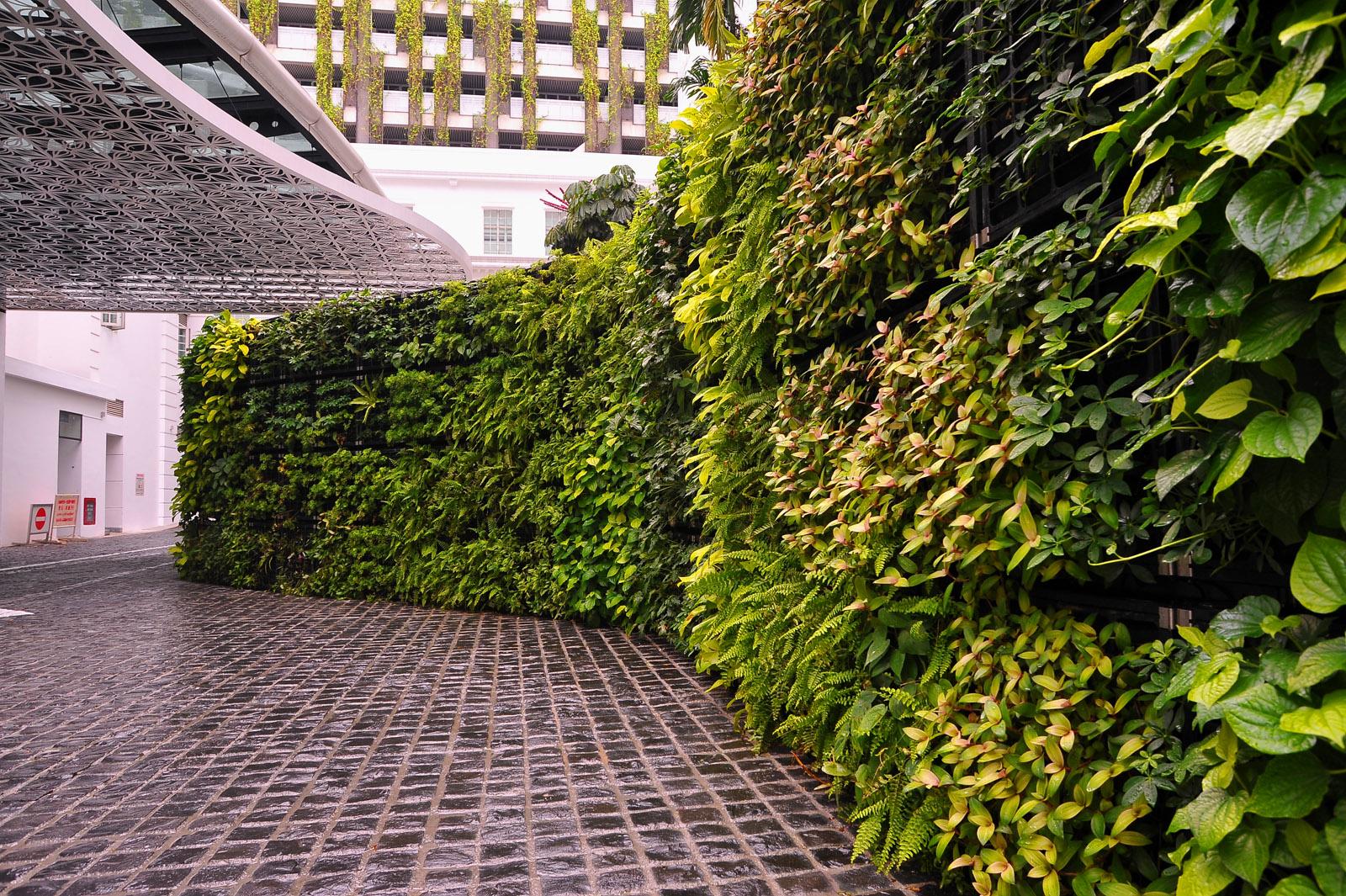 Plante Green Wall Vertical Garden Wallspan