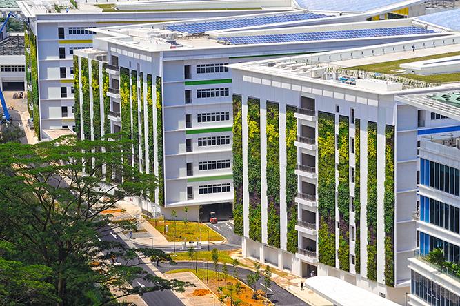 PLANTE GREEN WALL / VERTICAL GARDEN
